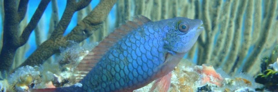Paisajes Fuente paradisediveshop com3